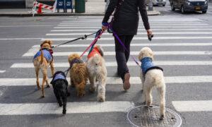 NY hondenuitlaatservice